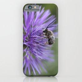 Wild horned bee iPhone Case