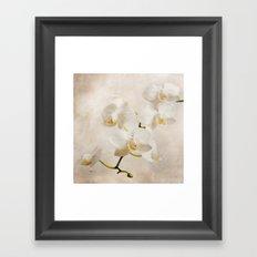 orchid (brown) Framed Art Print