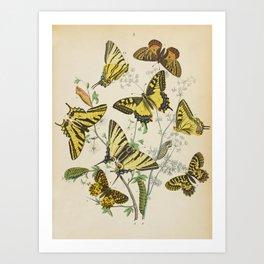 BUTTERFLIES LEPIDOPTERA Scarce Eastern Tiger Swallowtail Art Print