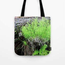 Green Forest Ferns Tote Bag