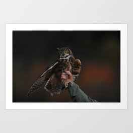 owl bird photo Art Print