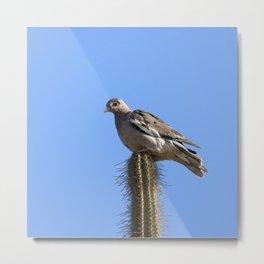 Watercolor Bird, Bare-eyed Pigeon 01, Bonaire, Dutch West Indies Metal Print