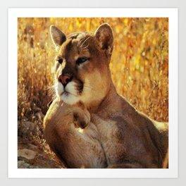 The Golden Thinker 🐾 Cougar 🐾 Art Print