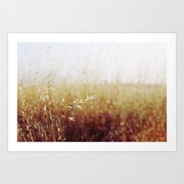 Calistoga Wheat Art Print