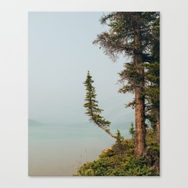 Lone Pine at Bow Lake Canvas Print