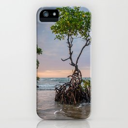 Mangrove Trees On The Beach At Sunset iPhone Case