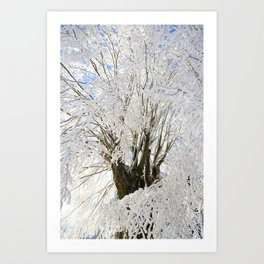 Icy Branches Art Print