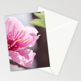 Peach Blossoms 8 Stationery Cards