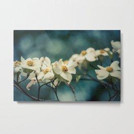 Spring Botanical -- White Dogwood Branch in Flower Metal Print