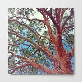 Sydney Red Gum Metal Print