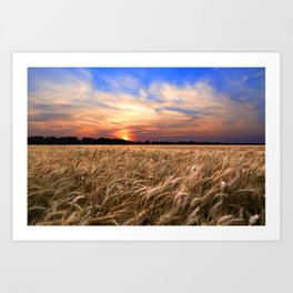 Sunset Harvest Art Print