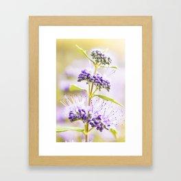 Russian Sage Framed Art Print
