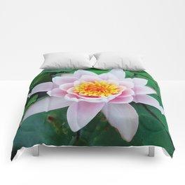 ninfea Comforters