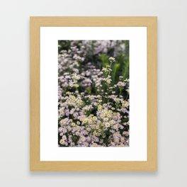 Japanese Daisies - Kawaguchiko Framed Art Print