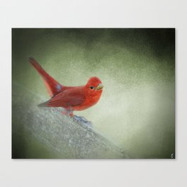 Song of the Summer Tanager 4 - Birds Canvas Print
