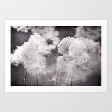 windflower seeds Art Print