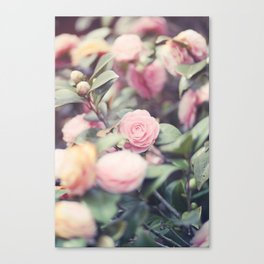Blu:m  Canvas Print