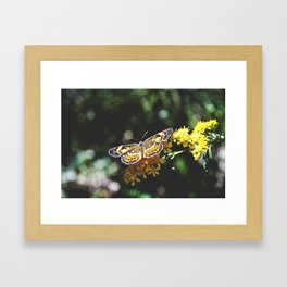 Butterfly in Action Framed Art Print