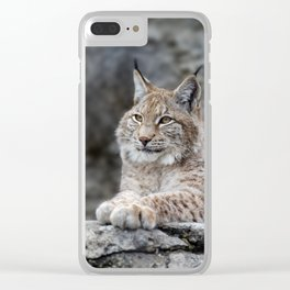 Young lynx portrait Clear iPhone Case
