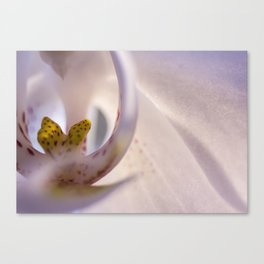 orchid_1 Canvas Print