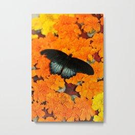 Butterflies love Marigolds Metal Print