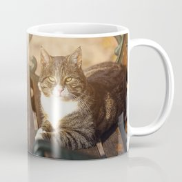Cute cat relaxing in the sun on old bench Coffee Mug