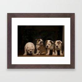 Four Bulldog Puppies Framed Art Print