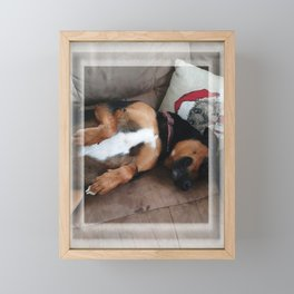 Firo is our family dog. He has a long history for one so young! Framed Mini Art Print