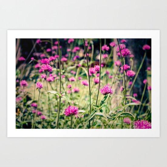 Pink Thistle Flowers in Field Art Print