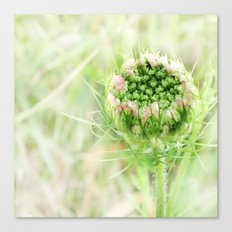 Wild carrot Canvas Print