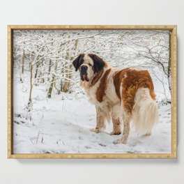 St Bernard dog in the snow Serving Tray
