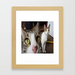 Back Yard Kitties  Framed Art Print