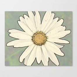 Flower | Flowers | Big White Daisy Canvas Print