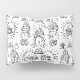 Ernst Haeckel - Spyroidea Pillow Sham