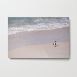 Lone African Penguin on Cape Town beach Metal Print