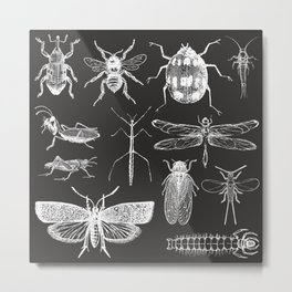Insect Entomology design Metal Print