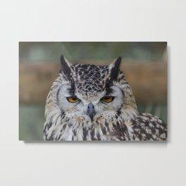 Angry Bengalensis Eagle Owl portrait. Metal Print