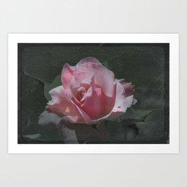 Crackled Rose Art Print