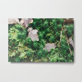 Pine Forest Moss Metal Print