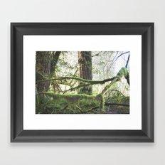 Forest Tree Jedediah Smith State Park  Framed Art Print