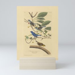 AUDUBON Bird Print INDIGO Bird Mini Art Print