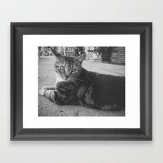 Street Kitty Framed Art Print