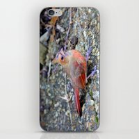 cardinal iPhone & iPod Skins featuring Cardinal by MyLove4Art