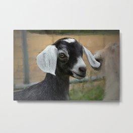 Baby Goat Kid Metal Print