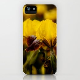 Yellow and Maroon Irisis iPhone Case