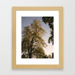 Perfect autumn-sunset colors Framed Art Print