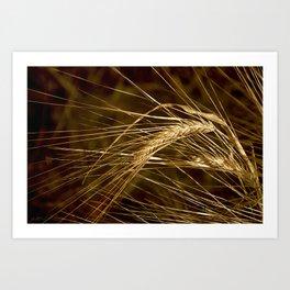 Barley for the Harvest Art Print
