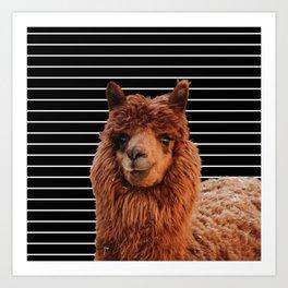 Llama Drama Art Print