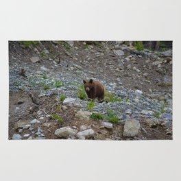 Black bear cub in Jasper National Park   Alberta Rug