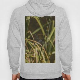 Dragonfly in the marsh Hoody
